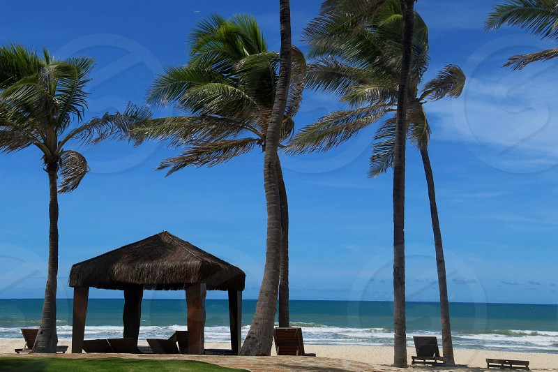 palm trees and a hut on the beach photo