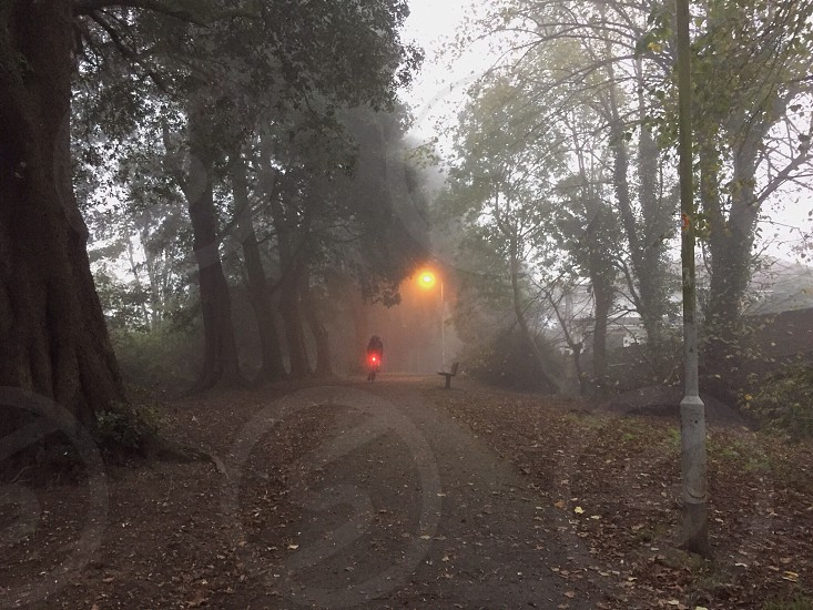 fogy forest road photo