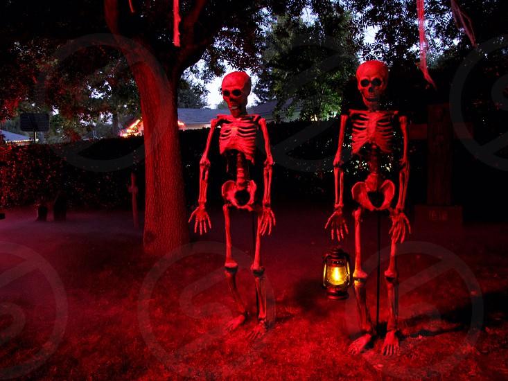 Halloween skeletons red lighting photo