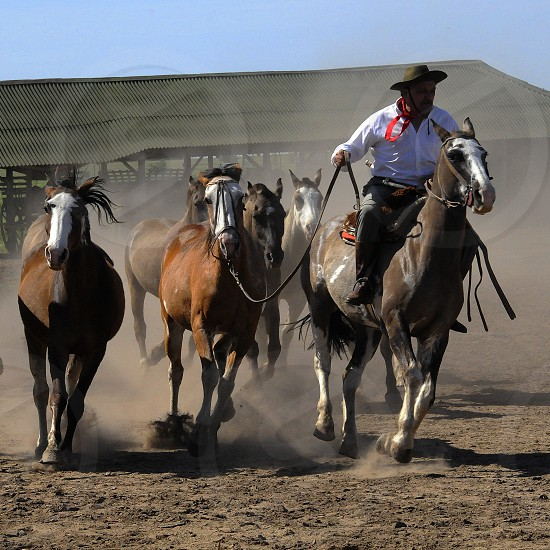 man riding horse photo
