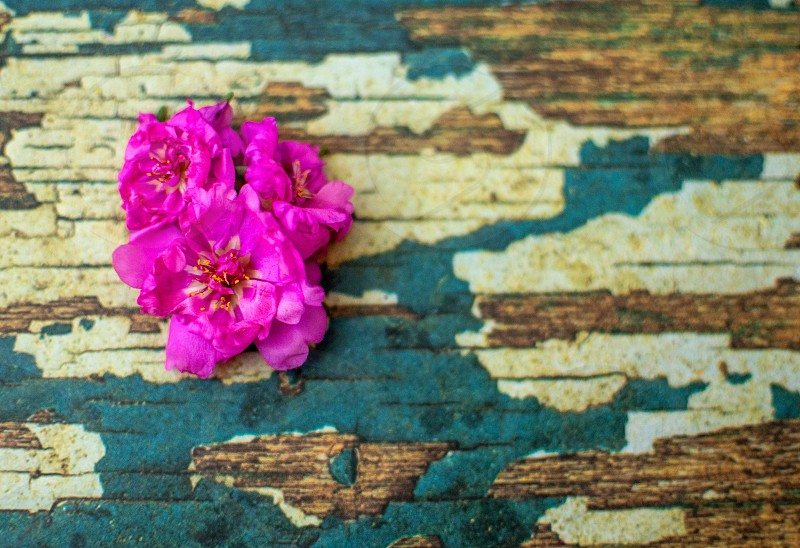 pink petunia flowers on wooden board photo
