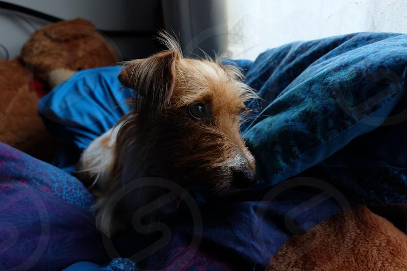 dog puppy cute photo