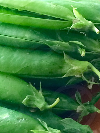 Peas pea pods food healthy greens symmetry close up picked peas in a pod vegetable photo