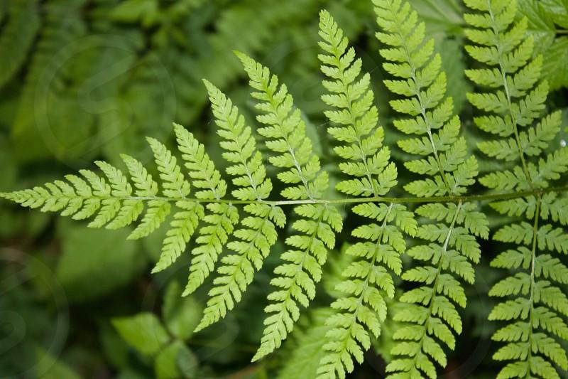 Fern green burn forest fern mountain forestry plants oxygen breathing summer symmetrical symmetry outdoors nature photo