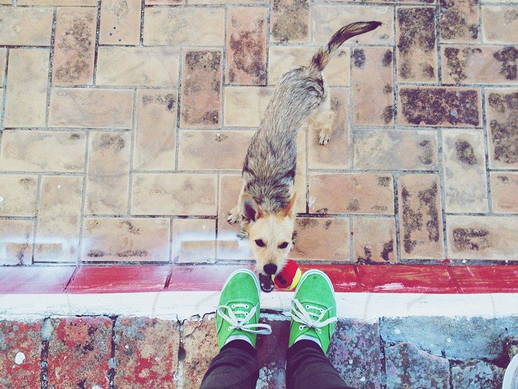 short-coated black and brown dog in front of person in black pants wearing green plimsolls photo