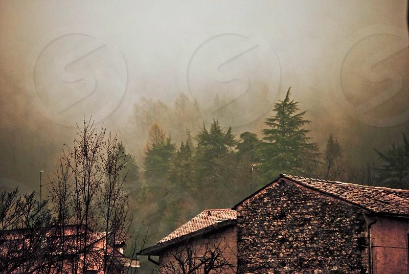 pine trees behind 3 houses photo