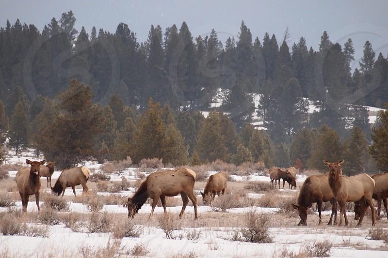 The herd photo