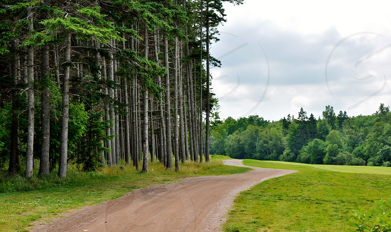 tree lined road photo