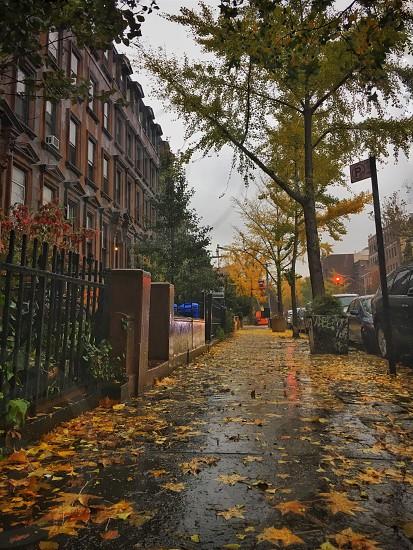 #fall #ny #newyork #autumn #cold #rain photo