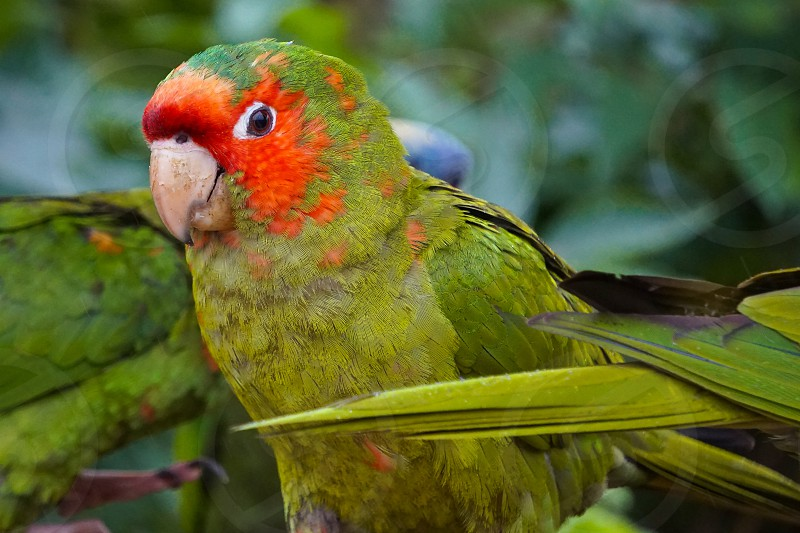 green parrot photo