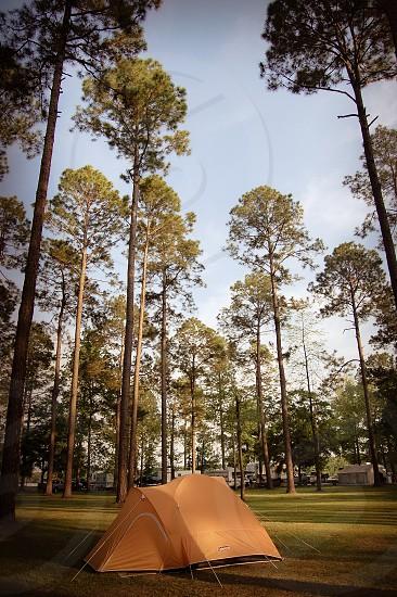 A little tent among the big pines Eufaula Alabama photo