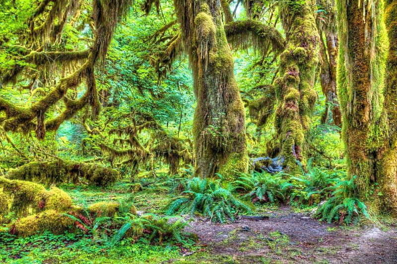 Hoh Rainforest WA photo