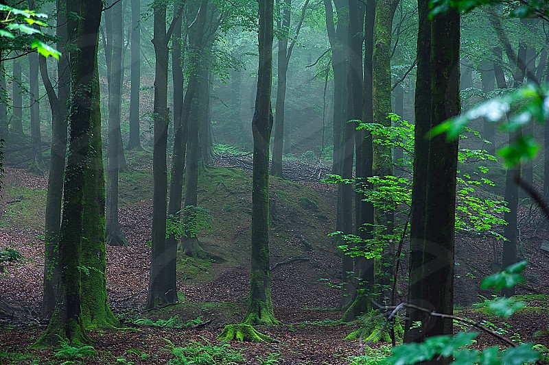 Foggy morning in forestSomersetUnited Kingdom. photo