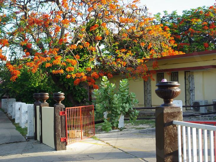 Rue colorée de Playa Varadero Cuba photo