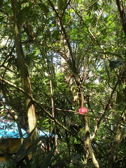Rainforest with little red flower. photo