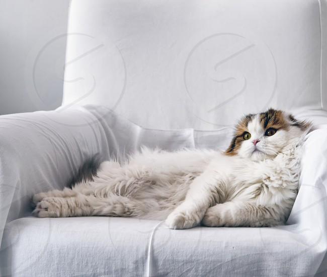 My furry nymph photo