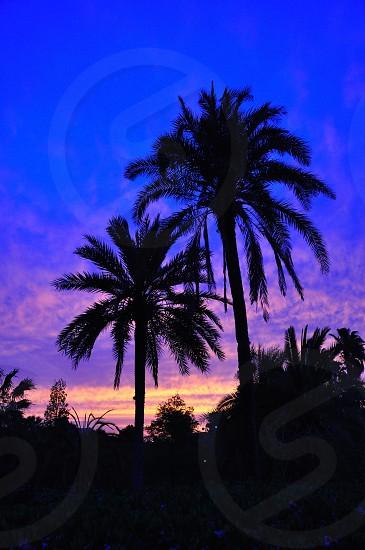 blue and purple sky photo