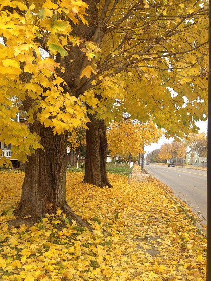 The fall always beautiful photo