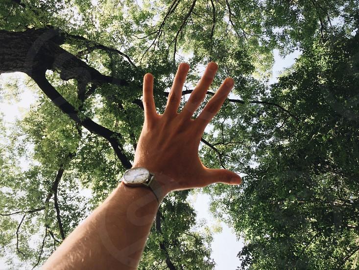 Hand Tree Leaves Green Watch Sky Sun photo