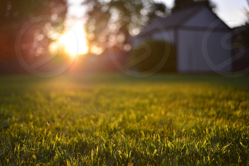 Lawn at sunset.  photo