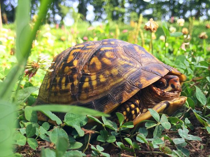 Turtle green  photo