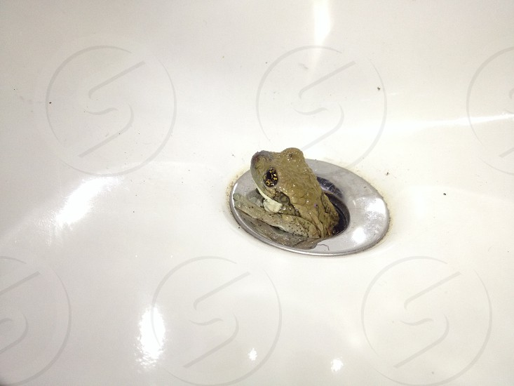 green frog on sink drainage photo
