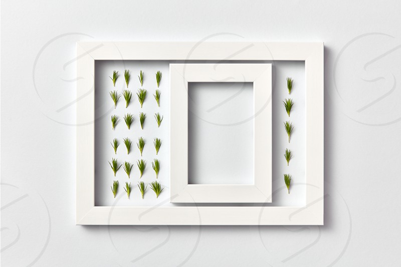 Empty frame with copy space and herbal pattern of young pine needles in a rectangular frame on a light gray background place for text. Flat lay. Greeting card photo