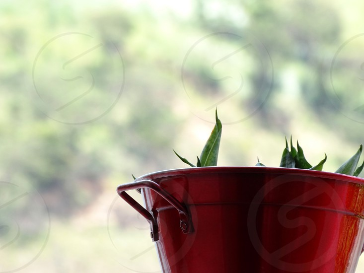 A small plant in a red metallic vase over a green blurred background. photo
