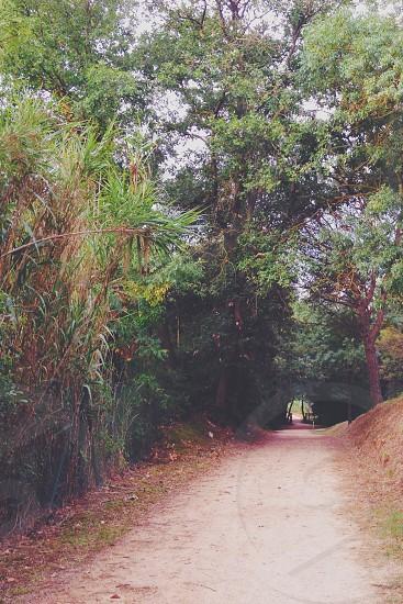 road through trees photo