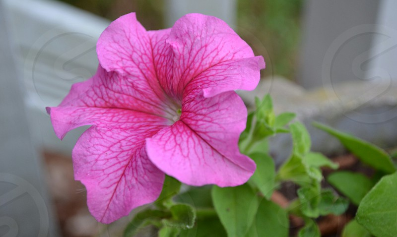 pink flower in macro photography photo