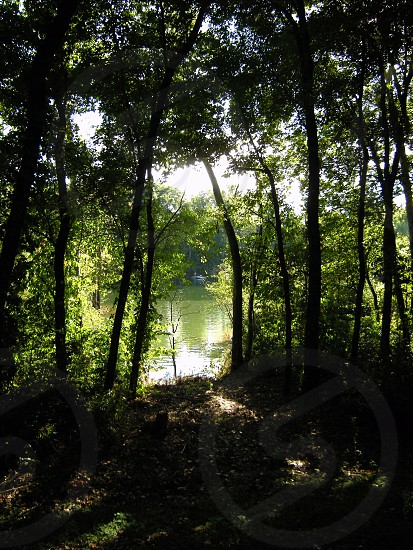 River through trees photo