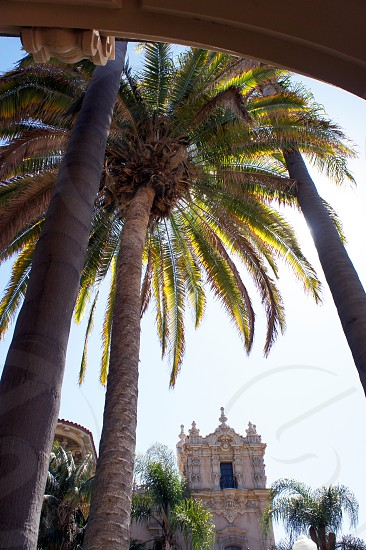 Palm Trees and buildings in Balboa Park in San Diego California photo
