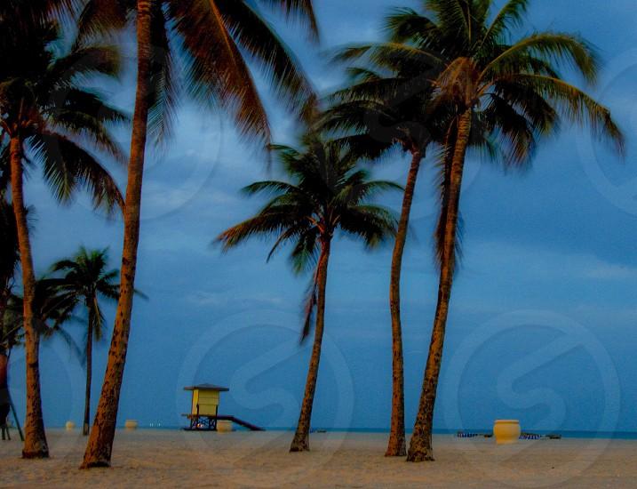 coconut palm trees on beach photo