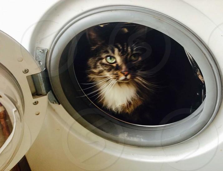 Tabby in a Washing Machine photo