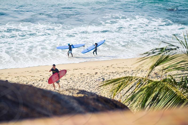 surfer surf tropical beach ocean palms photo
