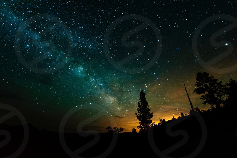 constellation and silhouette of juniper trees photo