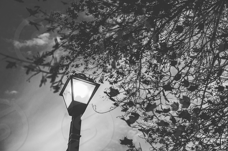 Street lamp city trees nature landscape spooky black and white Connecticut New England fall autumn night light November Halloween photo
