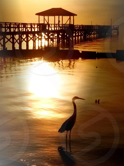 Texas Sunrise photo