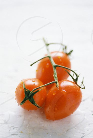 tomato vine ripened fresh picked summer ripe cherry tomatoes texas  photo