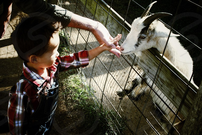 Petting Zoo photo