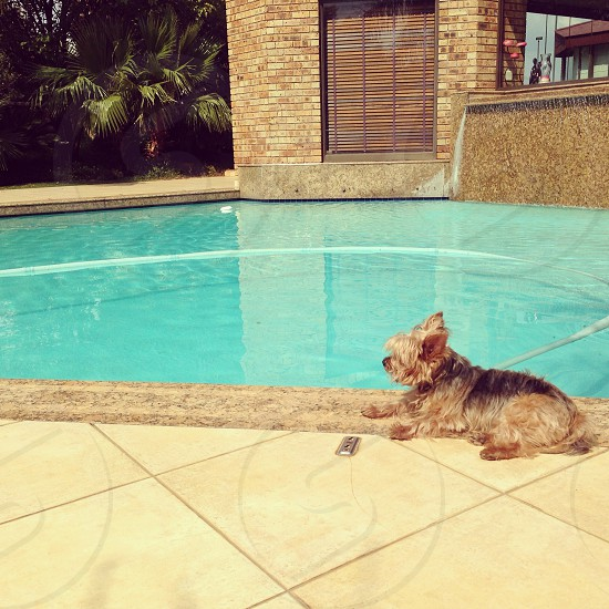 Dog by the pool photo