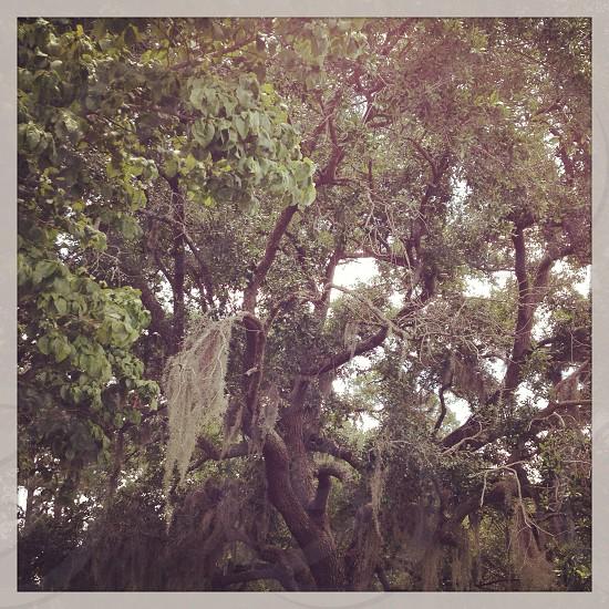 I love the tree  photo