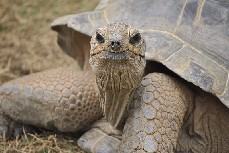 close-up photo of gray tortoise during daytime photo