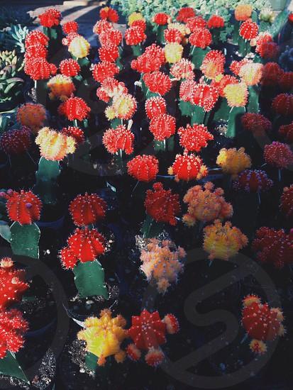 Cactuses. #nature #plants  photo