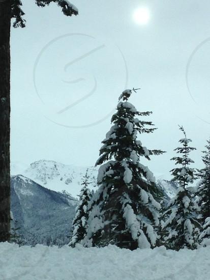 Snow frozen Olympic Mountains Hurricane Ridge nature trees mountains photo