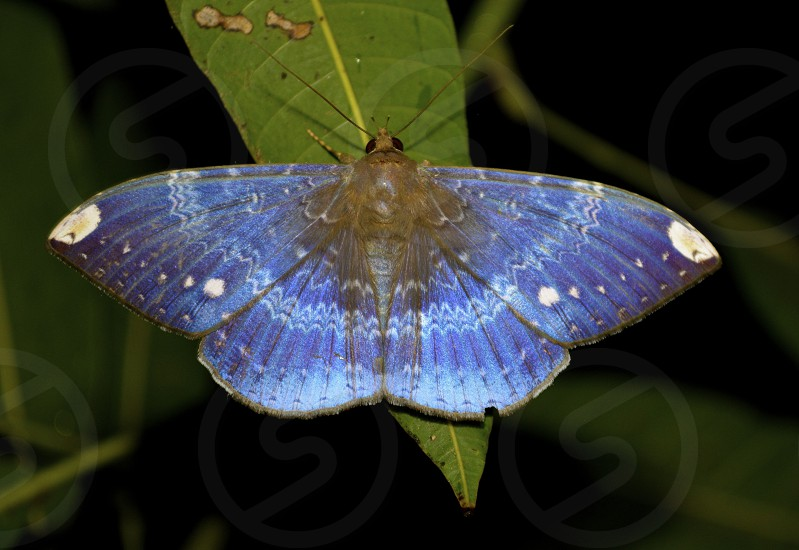 Blue moth wing patterns photo