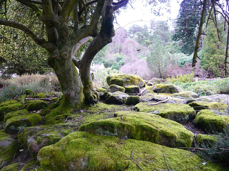 Mossy woods photo