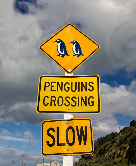penguins crossing signage photo