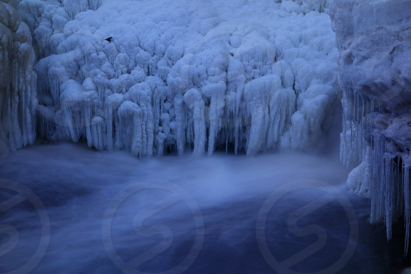 Ice formations and a little bird by a frozen waterfall. photo