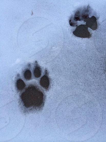 dog paw print photo